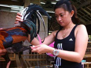 Keuntungan Bermain Sabung Ayam Online S128